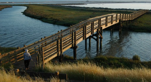 Don Edwards San Francisco Bay National Wildlife Refuge Bridge