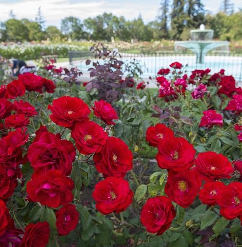 Rose Garden Freeman Gardens: Municipal Rose Garden