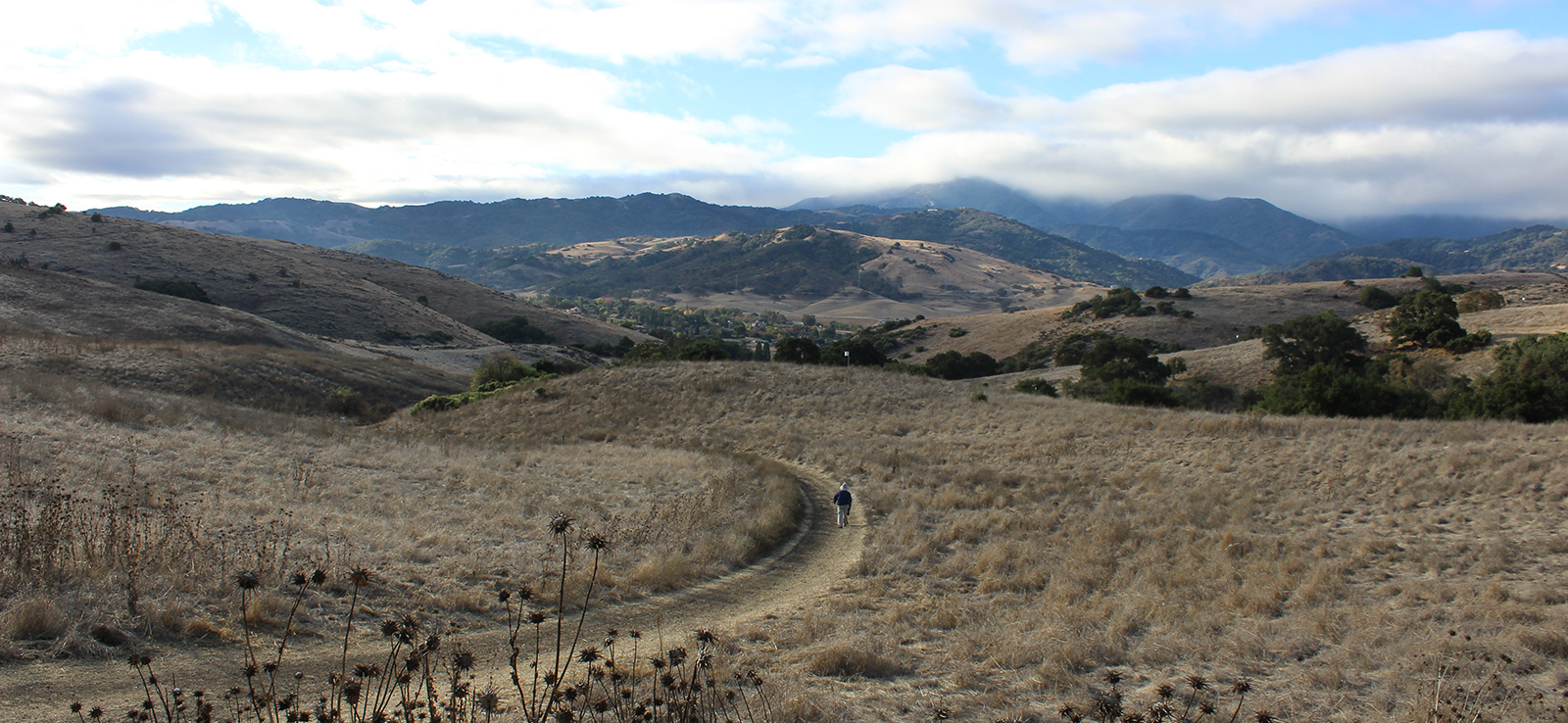 A hiker on a trail in Santa Teresa County Park