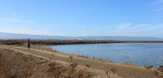 A trail wrapping around the bay at Don Edwards San Francisco Bay National Wildlife Refuge