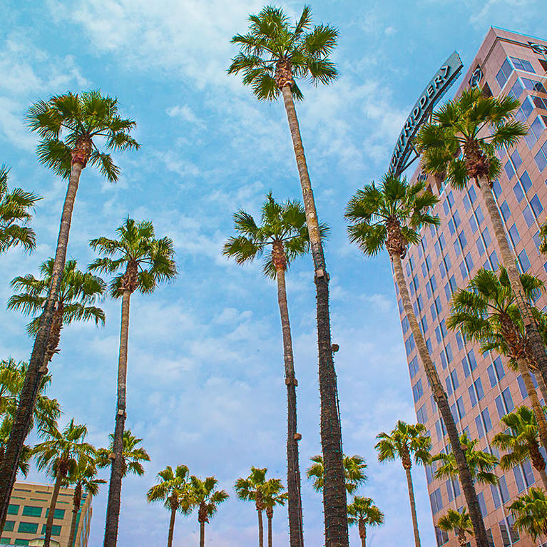 Skyview of the Circle of Palms and the Knight Ridder building in Downtown San Jose