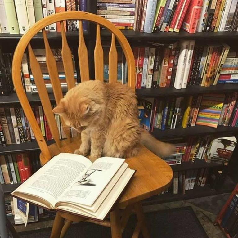 Bob Newhart Cat reading a book at the Recycle Bookstore